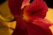 12th Apr 2014 - Orchid profile