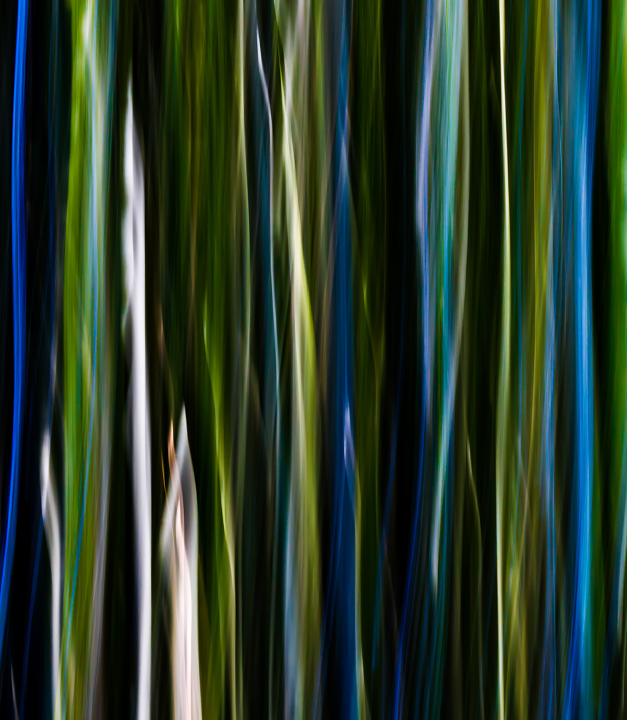 Inside the Bamboo Forest by darylo