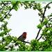 Singing In A Leafy Bower by carolmw