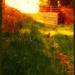 Pasture Gate by teiko