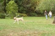 2nd Oct 2010 - Dog Day