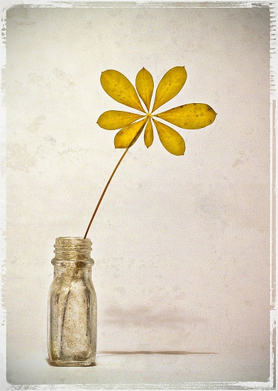 Still Life No. 1 by aikiuser