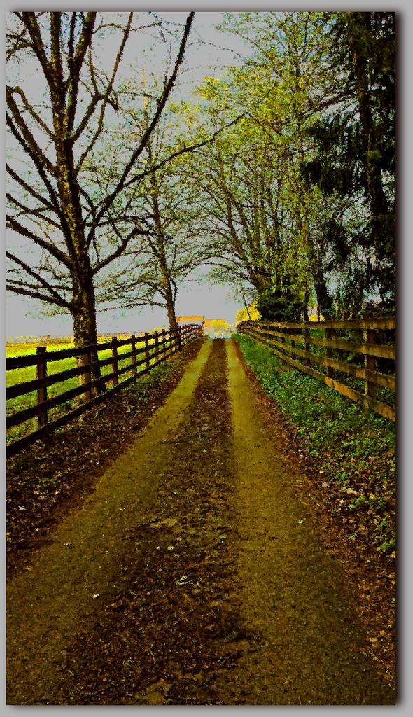 My driveway by teiko