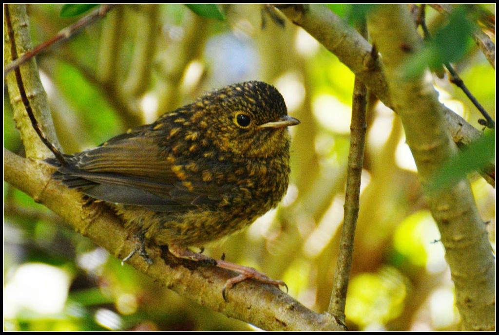 Baby robin again by rosiekind
