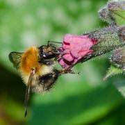 15th Apr 2014 - Bee - 15-04