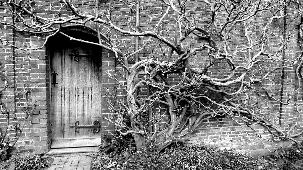 A door and a tree. by newbank