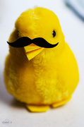 16th Apr 2014 - Easter chicken with mustache