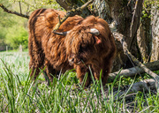 16th Apr 2014 - Beware of the bull - 16-04