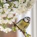 Blossom sunshade...... by shepherdmanswife