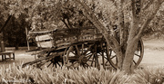 17th Apr 2014 - Old wagon out to pasture
