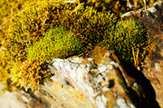 18th Apr 2014 - Moss on stone