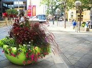 3rd Oct 2010 - Downtown Flowers