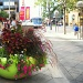 Downtown Flowers by suelbiz47