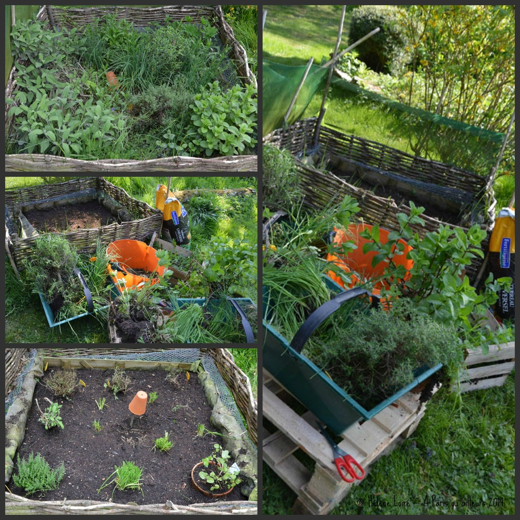 Spring cleaning in the mini garden of aromatic herbs by parisouailleurs
