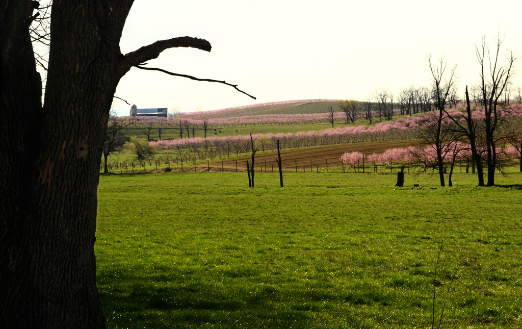 spring pink by francoise