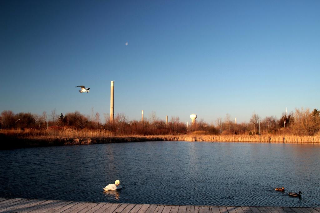 pondscape by summerfield