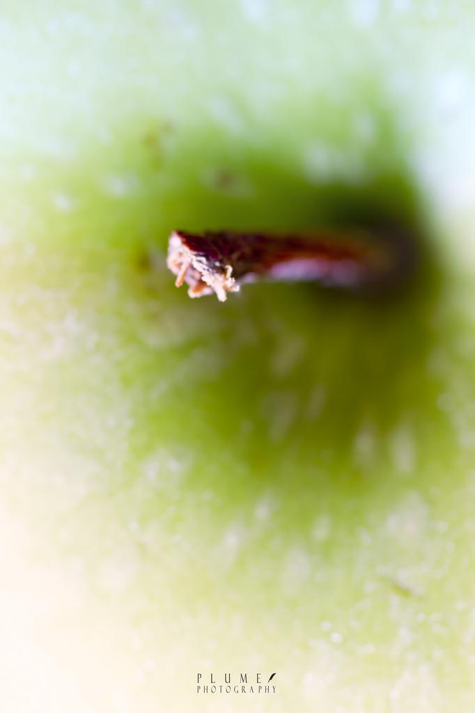Apple by orangecrush