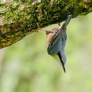 22nd Apr 2014 - Hanging on - 22-04