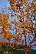 3rd Oct 2010 - Autumn Trees
