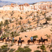Bryce Canyon Riders by cdonohoue