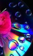 24th Apr 2014 - dvd rainbow