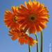 Backlit Flowers by lynne5477