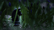 23rd Apr 2014 - the grassy knoll
