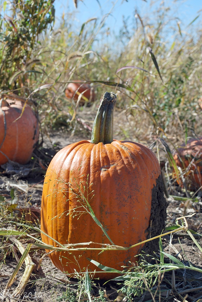 pumpkin patch time... by earthbeone