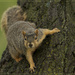 Squirrel! by lyndemc