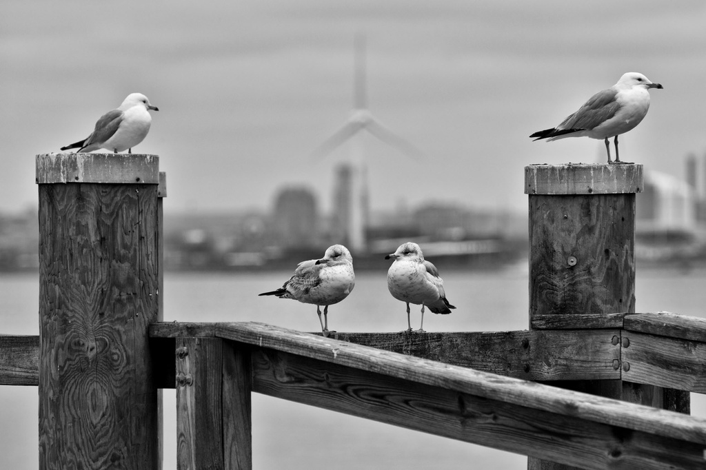 Family of Four by kannafoot