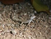 4th Oct 2010 - I Love Lizards