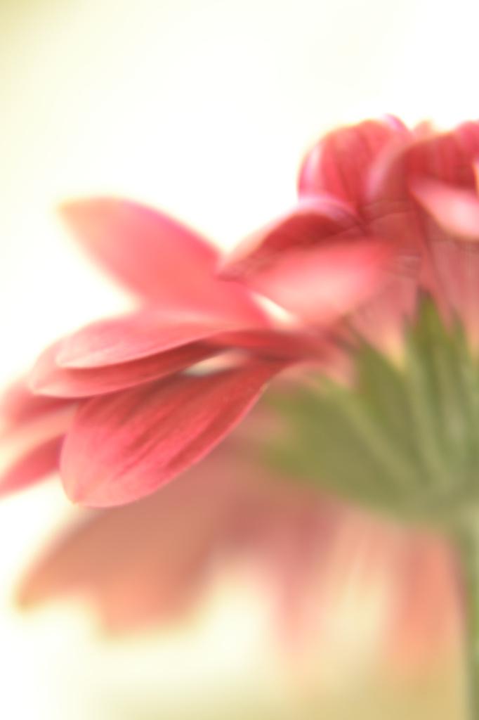 Pretty flower .... by ziggy77