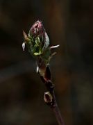 1st May 2014 - Signs of Life
