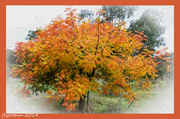 1st May 2014 - Autumn in oil colour