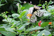 2nd May 2014 - Flutter