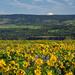 Rowena Crest, Oregon by vickisfotos