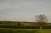 4th May 2014 - Over the hedge may - 4-05