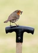 5th May 2014 - Home bird - 5-05