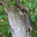 Tree hugger by cjwhite