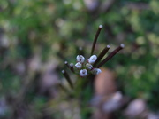 5th May 2014 - Tiny Flower