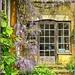 Wisteria, Coton Manor Gardens  by carolmw