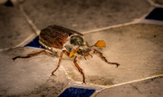 7th May 2014 - May Bug Warning...