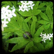 8th May 2014 - Life at a snail's pace