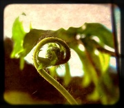 10th May 2014 - Unfolding