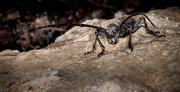 11th May 2014 - No more bugs, I said...