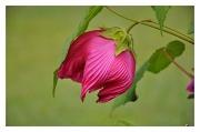 6th Oct 2010 - Pink Flower