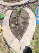 Herb Garden on 365 Project