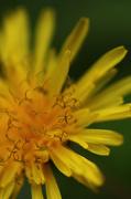 12th May 2014 - Yellow Beauty