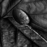 13th May 2014 - Leaf and spoon