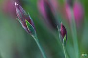 13th May 2014 - Purple and Green
